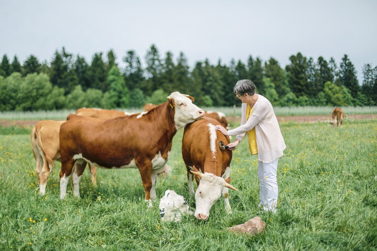 Kathleen striegelt Kuh